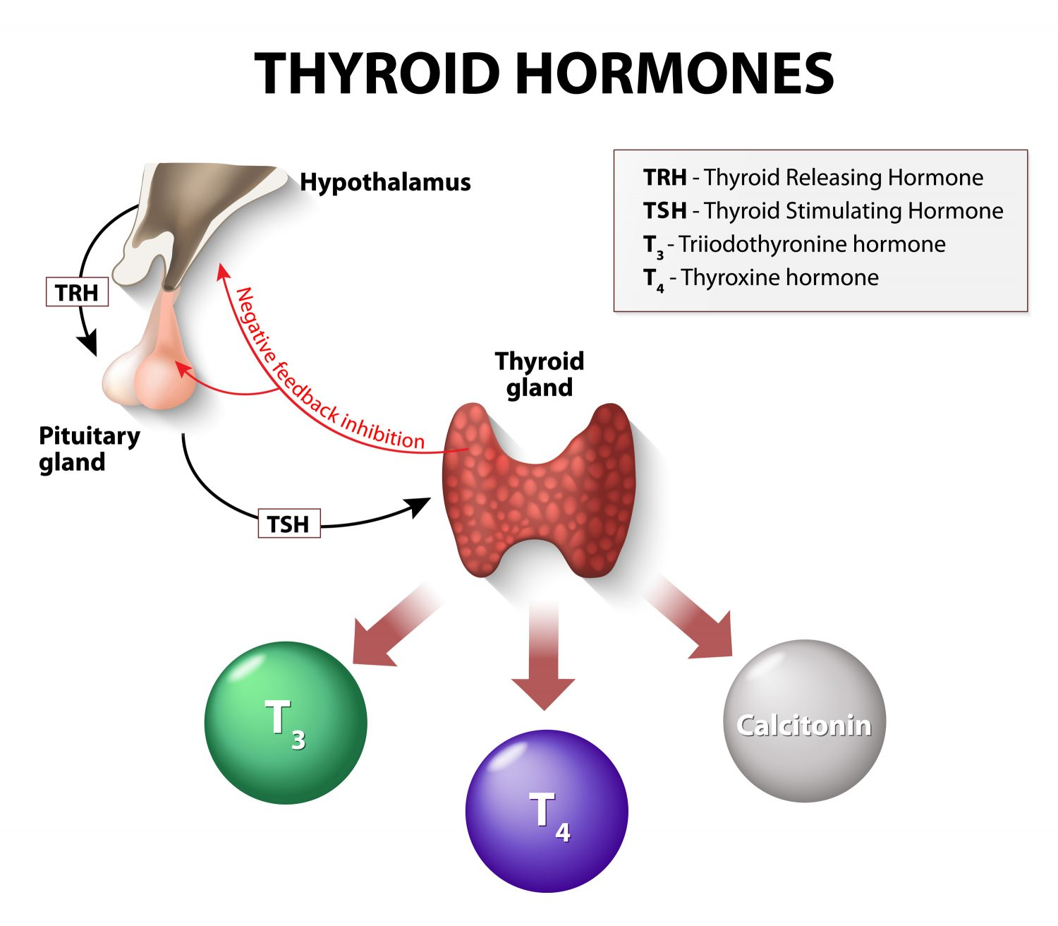 Hormones and Weight Loss Problems
